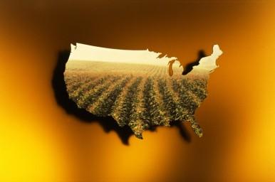 Corn_US_Hi Res